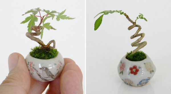 Miniature-bonsai-8