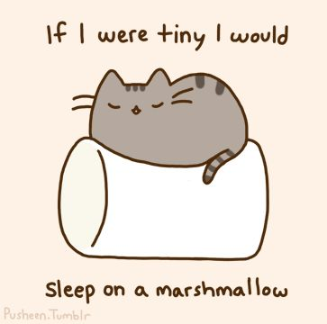 pusheen on marshmallow